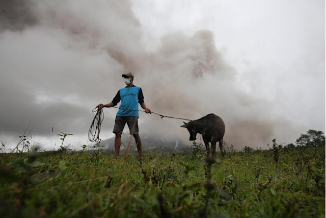 <p>A farmer gets his calf to bring to the nearest evacuation centre after Mayon Volcano spews ashes in Camalig, Albay province, Philippines, Jan.17, 2018. (Photo: Stringer/Reuters) </p>