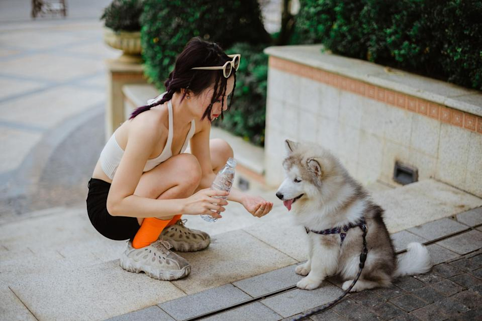 Dog ownership is becoming increasingly popular in China, but sometimes it causes tensions among residents. Credit: Getting Images