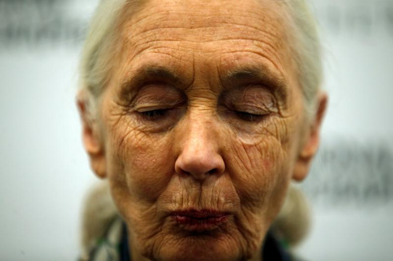 Jane Goodall turns 84 next month, but she has no plans to slow down. (Rafael Marchante / Reuters)