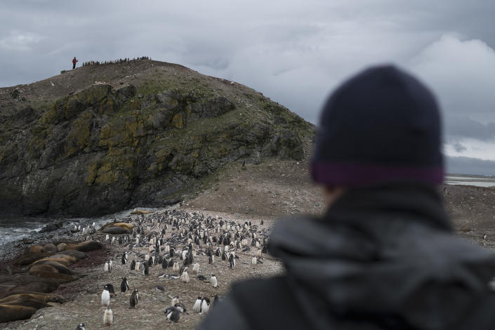 Scientists Noah Strycker and Steven Forrest from Stony Brook University counting penguins on Snow Island in the South Shetlands of Antarctica, on Jan. 31, 2020. | Christian Åslund —Greenpeace and TIME