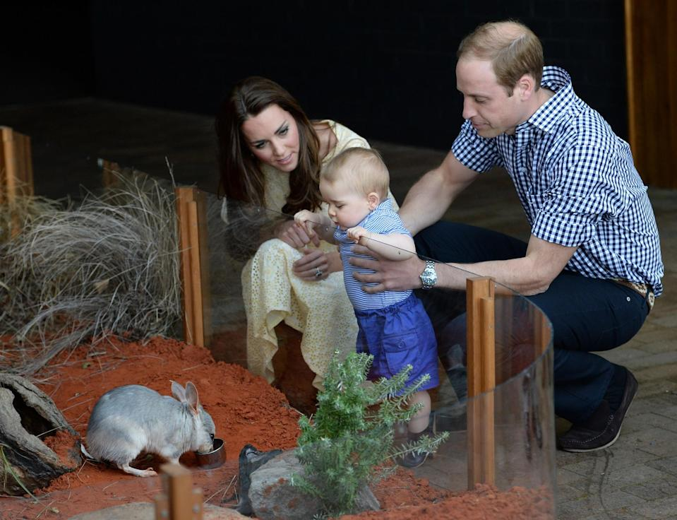 <p>He later wore comfy elastic-waist shorts to meet a bilby in Sydney. [Photo: Getty] </p>
