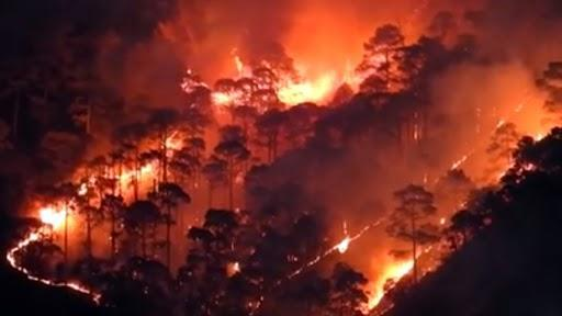 Uttarakhand Forest Fire: 4 People, 7 Animals Dead After Massive Blaze  Erupts in 62 Hectares of Forest Area; Property Worth Rs 37 Lakh Destroyed