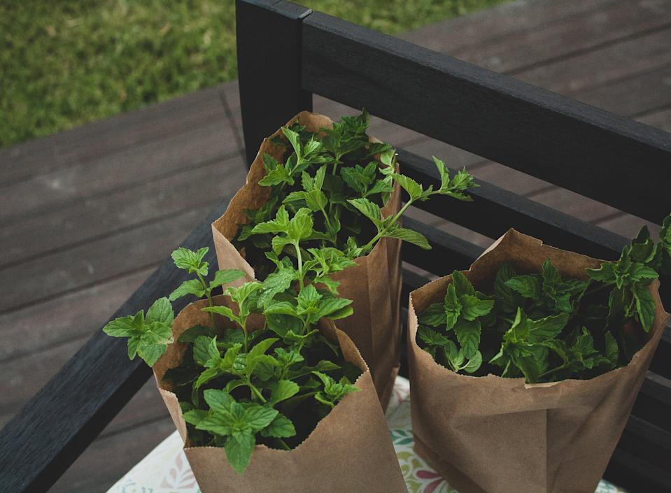 Garden trends: bags of mint
