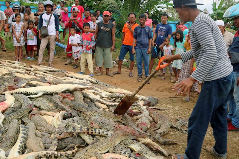 Local residents look at the carcasses of hundreds of crocodiles from a breeding farm after they were killed by angry locals following the death of a man who was killed in a crocodile attack in Sorong regency, West Papua