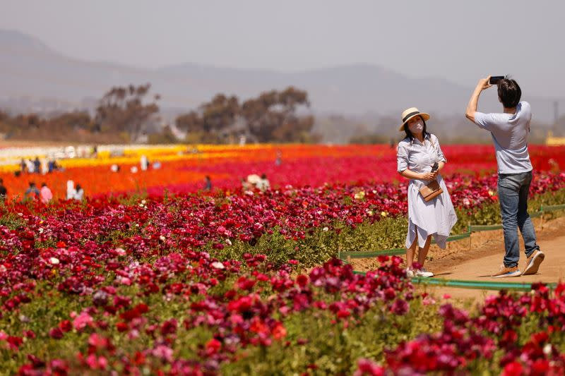 Flower Fields reopened for limited visitor numbers in Carlsbad, California