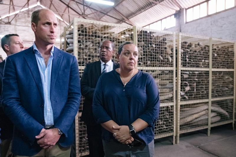 TANZANIA - OCTOBER 10: In this undated handout photo issued by Kensington Palace on October 10, 2018 to mark the launch of the Financial Taskforce, Prince William, Duke of Cambridge and Naomi Doak from United for Wildlife, and Head of Conservation Programmes at the Royal Foundation, visit Tanzania. The Duke of Cambridge was granted a rare visit to the ivory stockpile, which has been built up over the last 23 years and is believed to be the largest ivory stockpile in the world. (Photo by Kensington Palace via Getty Images) NEWS EDITORIAL USE ONLY. NO COMMERCIAL USE. NO MERCHANDISING, ADVERTISING, SOUVENIRS, MEMORABILIA or COLOURABLY SIMILAR.