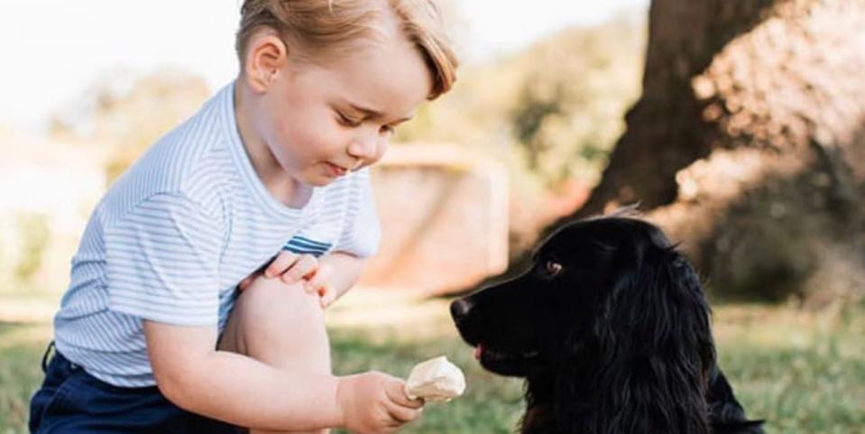 Kate Middleton and Prince William Reveal Their Dog, Lupo, Died in Heartbreaking Instagram