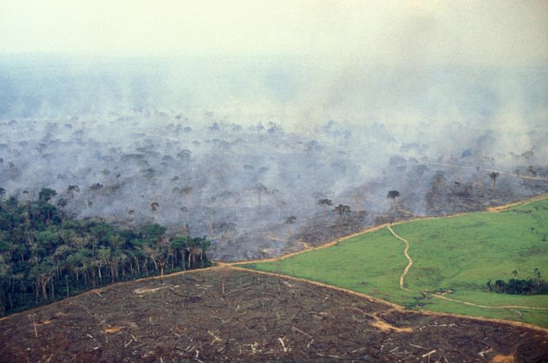 brazil amazon fire deforestation