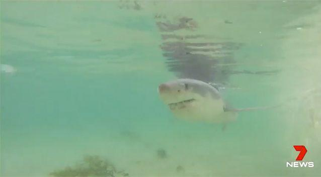 The shark will be monitored. Source: 7 News