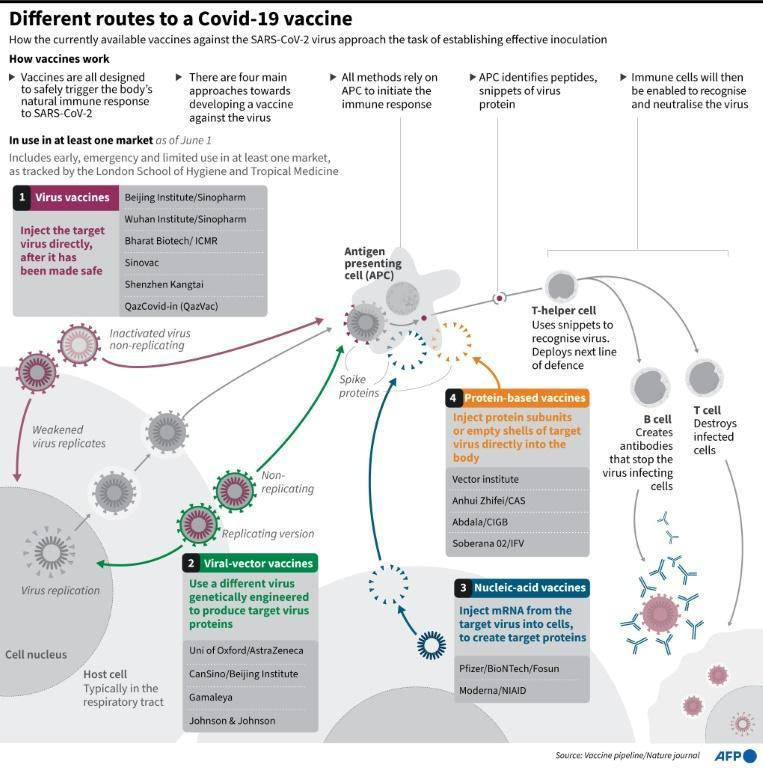 Different routes to a Covid-19 vaccine