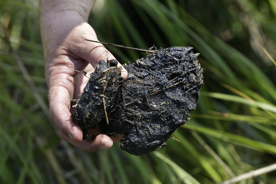 FILE - In this April 18, 2013 file photo, a tar ball from oil from the Deepwater Horizon oil spill is seen on a shoreline in Bay Jimmy in Plaquemines Parish, La. Ten years after the nation's biggest offshore oil spill fouled its waters, the Gulf of Mexico sparkles in the sunlight and its fish are safe to eat. But scientists who have spent $500 million dollars from BP researching the impact of the Deepwater Horizon disaster have found much to be concerned about. (AP Photo/Gerald Herbert, File)