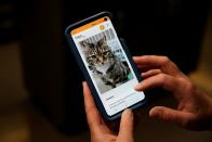 Dr. Liz Ruelle uses a new app called Tably that reads cat's faces and helps her monitor a cat's health at the Wild Rose Cat clinic in Calgary