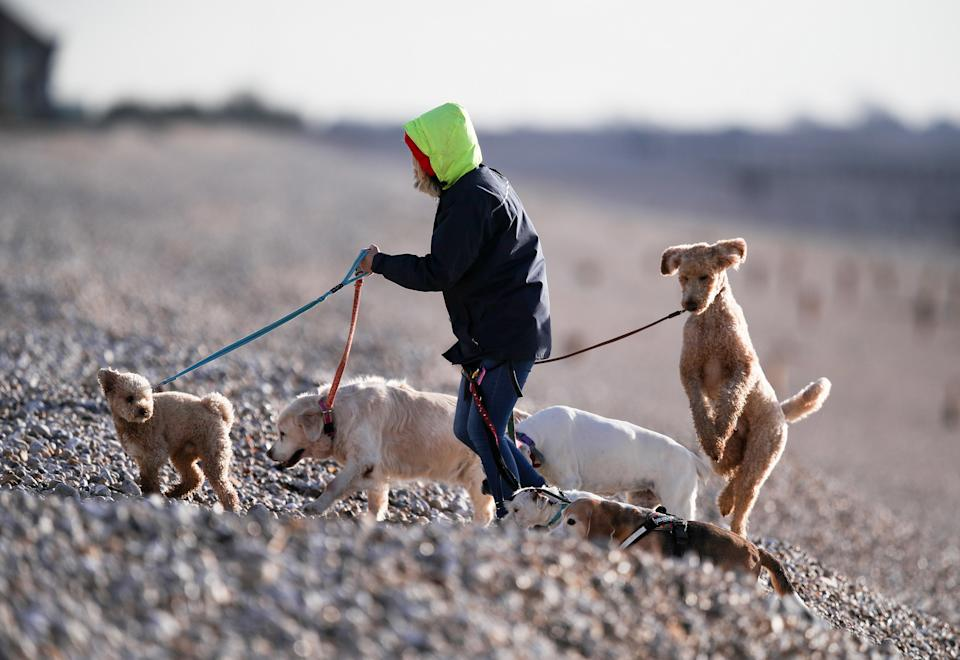 Dogs are most at risk in parks, or fields, where there are large numbers of birds. Stock image. (PA)
