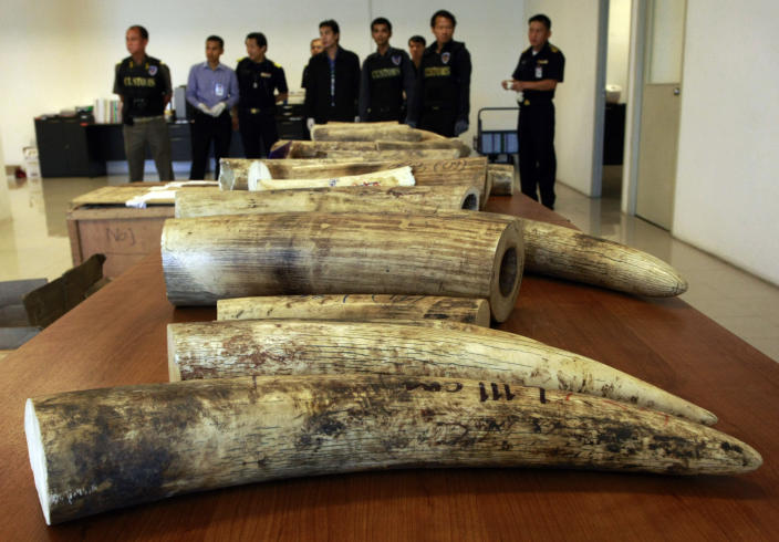 In this photo taken July 17, 2012, Thai custom officials stand next to a line of ivory that were confiscated and shown at a news conference in Bangkok, Thailand. Officials at Thailand's gateway airport proudly tick off the illegally trafficked wildlife they have seized over the past two years. But Thai and foreign law enforcement officers tell another story: officials working-hand-in-hand with the traffickers ensure that other shipments through Suvarnabhumi International Airport are whisked off before they even reach customs inspection. (AP Photo/Apichart Weerawong)