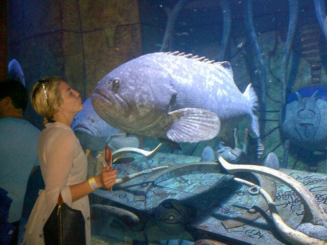 """Celebrity photos: TOWIE's Lydia Bright went on a trip to an aquarium this week where she got up close to a massive fish. She tweeted the image along with the caption: """"OMG is this the biggest most hideous fish in the whole world."""" [sic] Image: Twitter."""