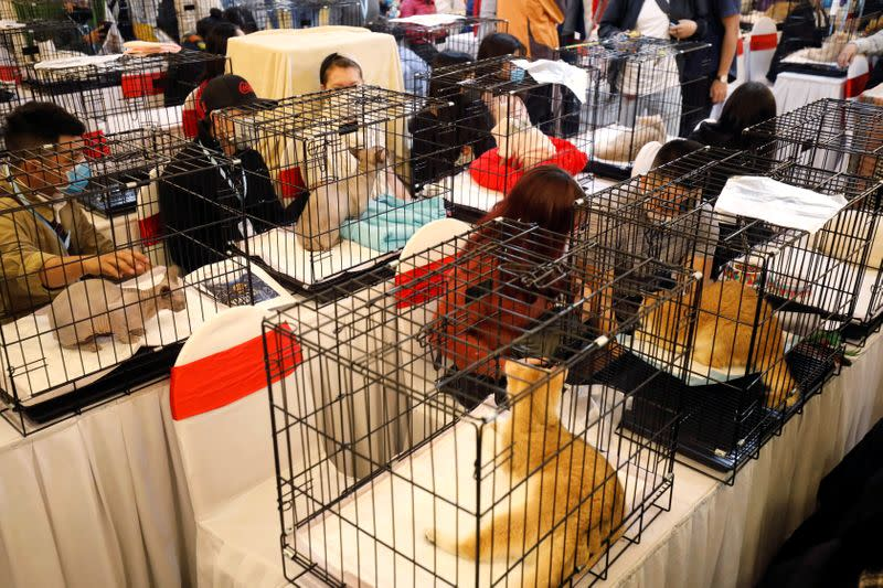 Cats are seen on cages during the Vietnam's first cat show in Hanoi