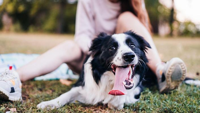 Protect your furry family members from hot-weather emergencies with these vet-approved tips.