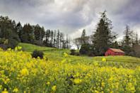 """<p><a href=""""https://go.redirectingat.com?id=74968X1596630&url=https%3A%2F%2Fwww.tripadvisor.com%2FTourism-g32482-Healdsburg_Sonoma_County_California-Vacations.html&sref=https%3A%2F%2Fwww.thepioneerwoman.com%2Fjust-for-fun%2Fg34836106%2Fsmall-american-town-destinations%2F"""" rel=""""nofollow noopener"""" target=""""_blank"""" data-ylk=""""slk:This northern Sonoma County"""" class=""""link rapid-noclick-resp"""">This northern Sonoma County</a> town is a lesser-known destination for wine tasting, but no less gorgeous. If you've had your fill of pinot, there's still plenty to do, including hiking, biking and even canoeing.</p>"""