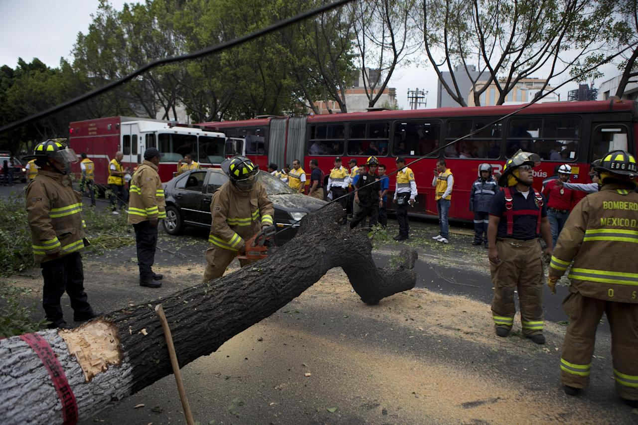 Firefighters cut apart a fallen tree that took down power lines and landed on a car, after an earthquake shook the city and sent people scurrying from office buildings, in Mexico City, Thursday, May 8, 2014. A strong earthquake shook the southern Pacific coast of Mexico and several states, including the capital on Thursday. (AP Photo/Rebecca Blackwell)
