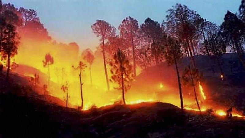 Amazon Rainforest Fire: #PrayForAmazonia Trends on Twitter as Users Call For World's Attention To Wildfires in Brazil