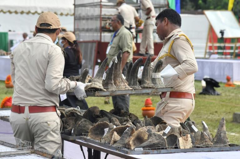 The animal parts had been kept in storage by the government since 1969 (AFP/Biju BORO)
