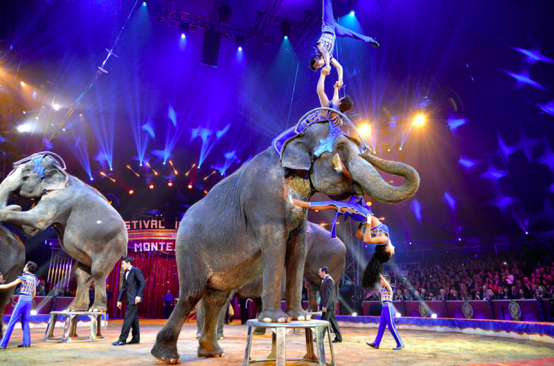 POLL: Should the use of wild animals in entertainment be banned?