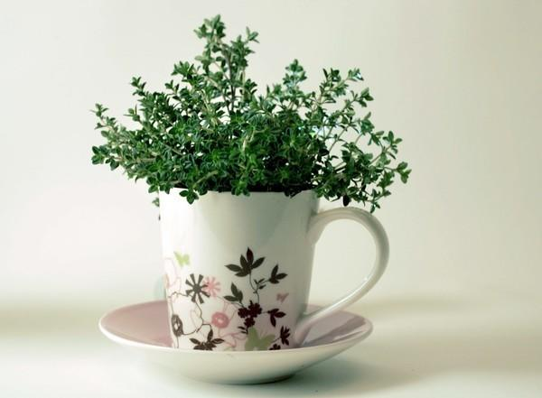 """A cup of thyme is one way to grow herbs. Sherman Library & Gardens is offering a class for children on Nov. 21 to help them learn other ways. <span class=""""copyright"""">(Karen Tapia-Andersen / Los Angeles Times)</span>"""