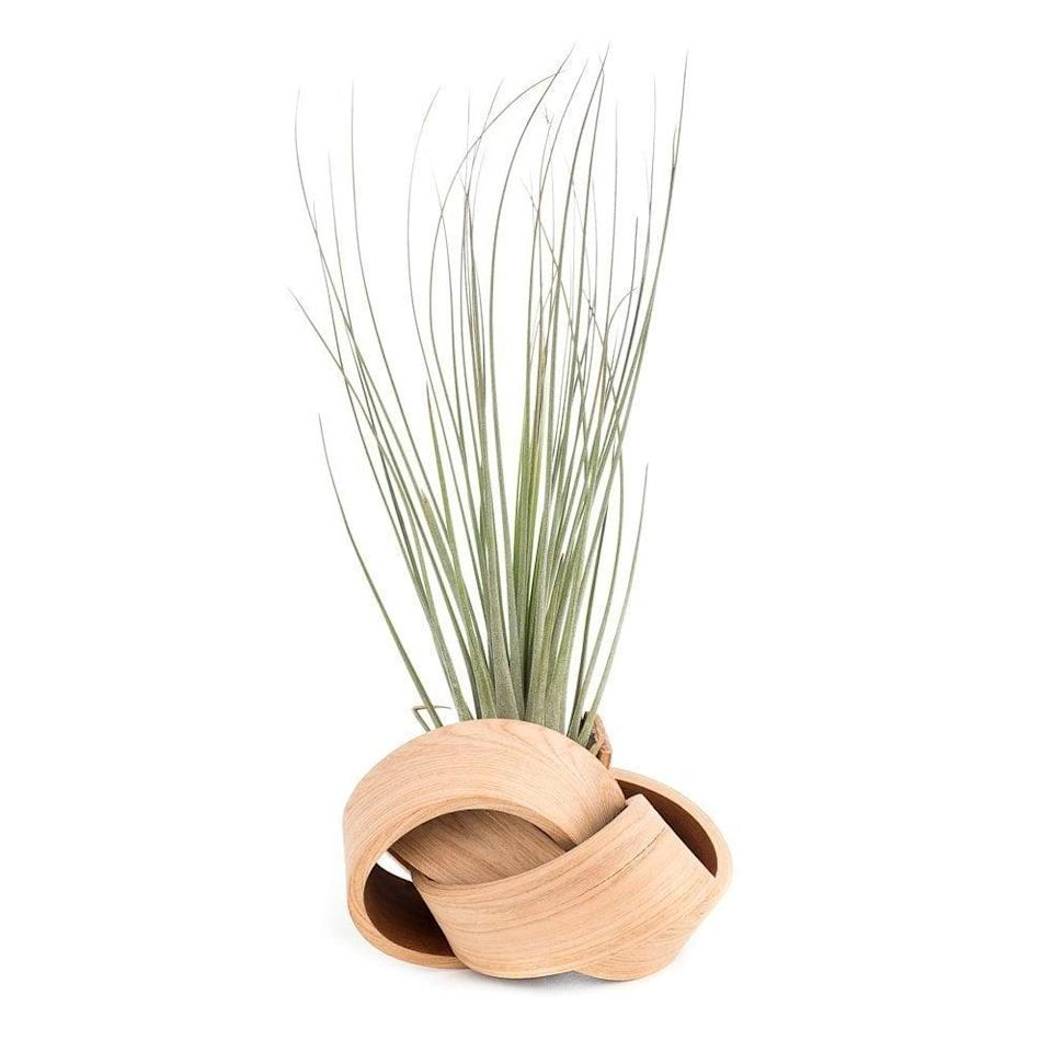 <p>The <span>Art of Plants The Lotus</span> ($105) is a wooden sculpture vase that can fit tall air plants.</p>