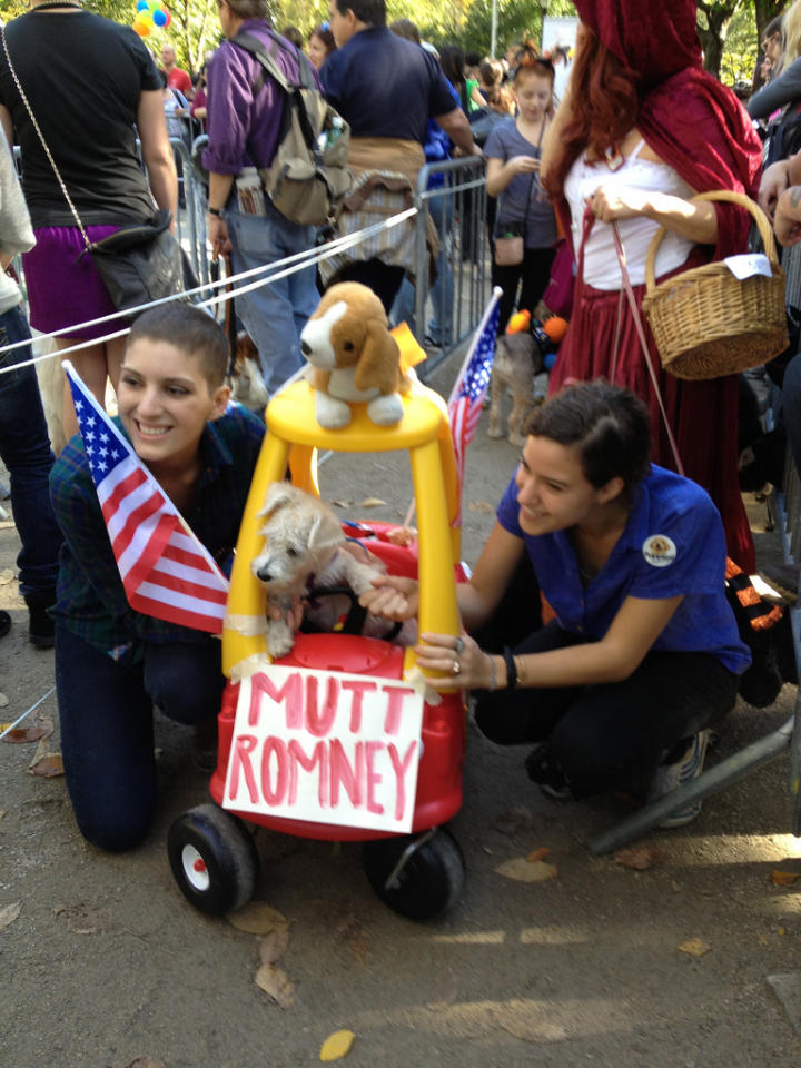 """<b>Seamus</b><br><br>Seamus--the dog who spent a road trip traveling on top of the Romney family car--lived a long life as a campaign quip, appearing in political cartoons, opposition stump speeches, Gail Collins NYT columns, and pet gear. Pick your favorite. <br><br>(Photo courtesy <a target=""""_blank"""" href=""""http://www.flickr.com/photos/bettyx1138/8107049549/"""">bettyx1138</a>/Flickr)"""