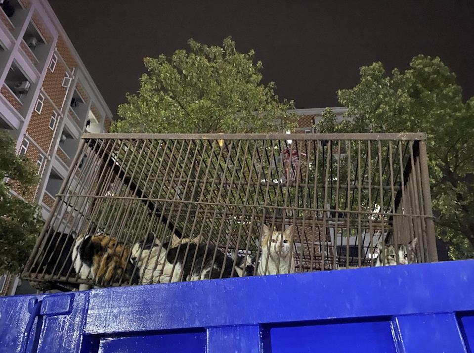 The rescued felines were transferred to a government care facility. Photo: Handout