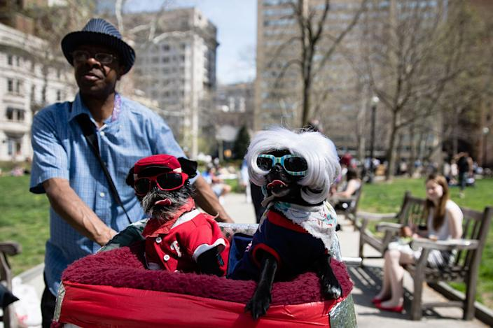 <p>Anthony Smith pushes his dogs Noodles, center, and Deva in a bicycle basket on a spring afternoon at Rittenhouse Square in Philadelphia, Tuesday, April 11, 2017. (AP Photo/Matt Rourke) </p>