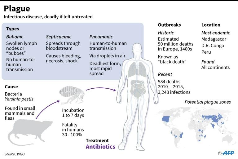 an analysis of bubonic plague an infectious disease of animals and humans caused by a bacterium yers Deja review™ usmle step 1 notice medi ci ne i s a n ever-cha ngi ng s ci ence as new res ea rch a nd cl i ni ca l experi ence broa den our knowl edge, cha nges i.