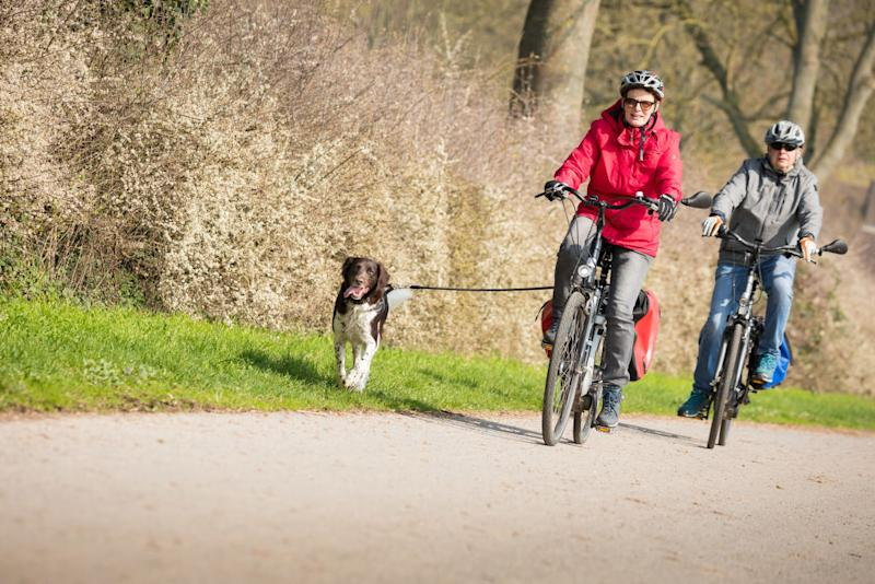 A female and male cyclist accompanied by a dog ride on a path in North Rhine-Westphalia, Germany. Source: Moritz Frankenberg/picture alliance via Getty Images.