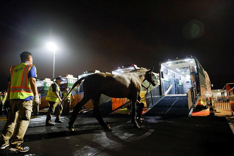 A dressage horse arrives at Tokyo Haneda Airport for Tokyo 2020 Olympic Games in Tokyo
