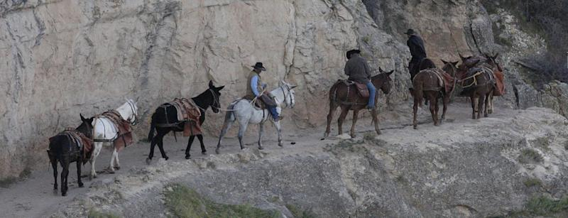 This Monday Oct. 22, 2012, photo shows a mule team walking along the Bright Angel Trail on the South Rim of the Grand Canyon National Park in Arizona. Search engine giant Google is using the Trekker, a nearly 40-pound, backpack-sized camera unit, to showcase the Grand Canyon's most popular hiking trails on the South Rim and other off-road sites. It's about 4 feet in height when set on the ground, and when worn, the camera system extends 2 feet above the operator's shoulders.  (AP Photo/Rick Bowmer)