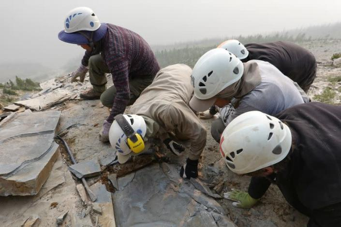 Members of the Royal Ontario Museum fieldwork crew extract a shale slab containing a fossil of Titanokorys gainesi