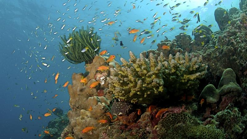 Coral reefs off the Andaman coast. Image: Wikimedia Commons