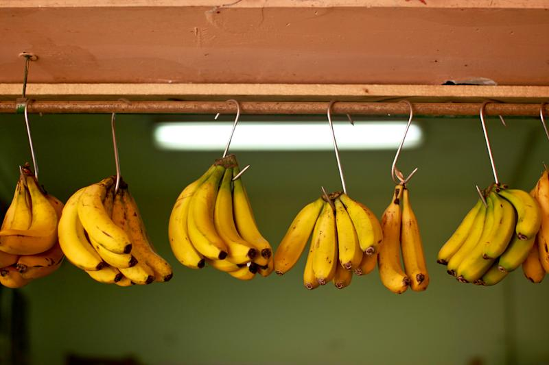 Close up of bunches of bananas from the Canary Islands hanging from hooks in a market stall.