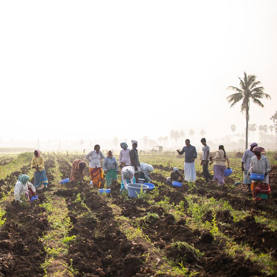 "<div class=""caption""> Diaspora Co.'s farm workers in the fields </div> <cite class=""credit"">Photo by Sana Javeri Kadri / Diaspora Co. </cite>"