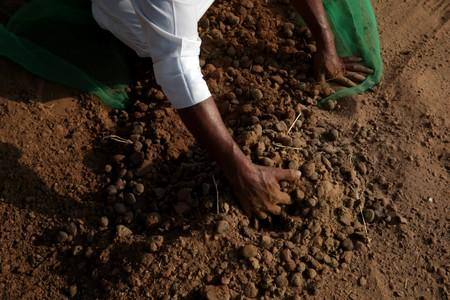 A camel herder collects feces at a farm in Adhen Village