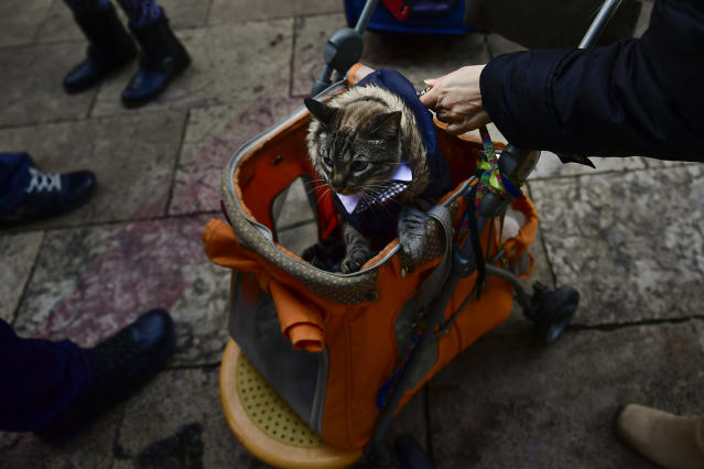 <p>A pet is carried into Saint Pablo church during the feast of St. Anthony, Spain's patron saint of animals, in Zaragoza, northern Spain, Wednesday, Jan.17, 2018. (Photo: Alvaro Barrientos/AP) </p>