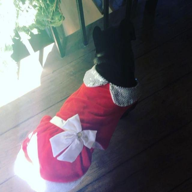 <p>Asia led Gaga to their present haul on Christmas 2016 — though all the pup really wanted was a belly rub.</p>