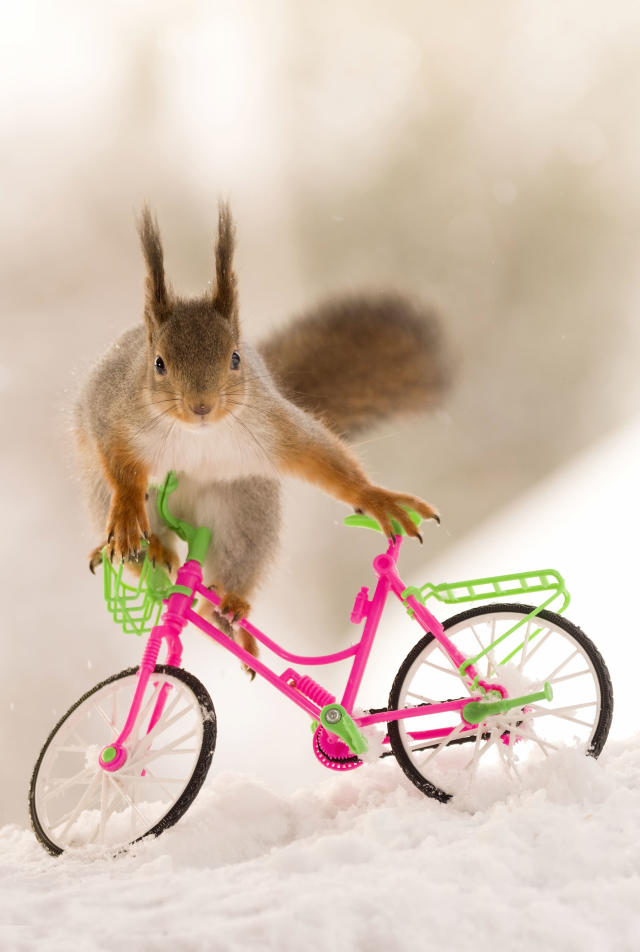 "<p>""In this case, I put small pins into the bikes to keep them propped up and stop the squirrels [from] knocking them over."" (Photo: Geert Weggen/Caters News) </p>"