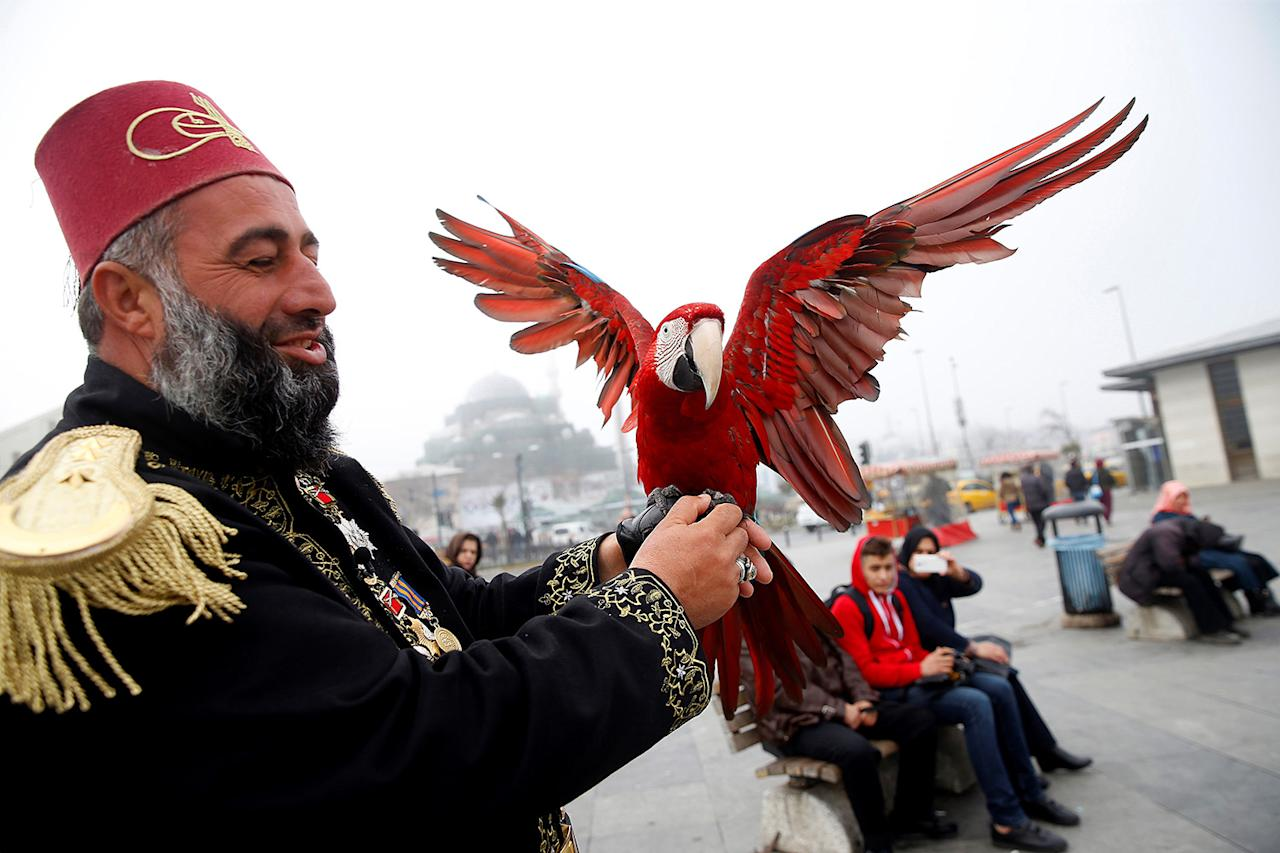 "<p>Nazim Cihan's parrot ""Pasha"" spreads his wings in Istanbul, Turkey on March 7, 2017. (Photo: Elif Ozturk/Anadolu Agency/Getty Images) </p>"