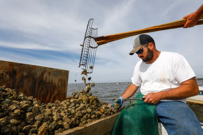 Michael Dasher, Jr., measures and culls oysters as his father opens his tongs and drops shellfish pulled from the bottom of Apalachicola Bay off Eastpoint, Florida