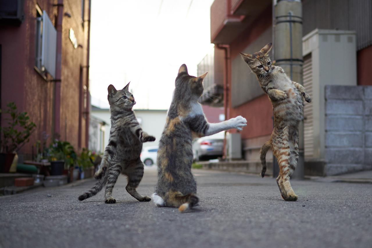 <p></p><p><span>The cats, all photographed on the streets of Japan, would put the likes of Bruce Lee and Jackie Chan to shame. </span>(Photo: Hisakata Hiroyuki/Caters News) </p><p></p>