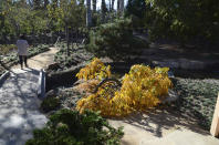 A view from the Japanese-style open-air Pavilion, used for reflection, mindfulness and community classes, looks towards a footbridge and walkway that is handicap accessible next to a Japanese wisteria and a waterfall on right, in the Japanese Garden at Lotusland, Monday, Nov. 23, 2020, in Montecito, Calif. The sounds of rushing water are heard while walking on the footpaths nearby before seeing the source. (AP Photo/Pamela Hassell)