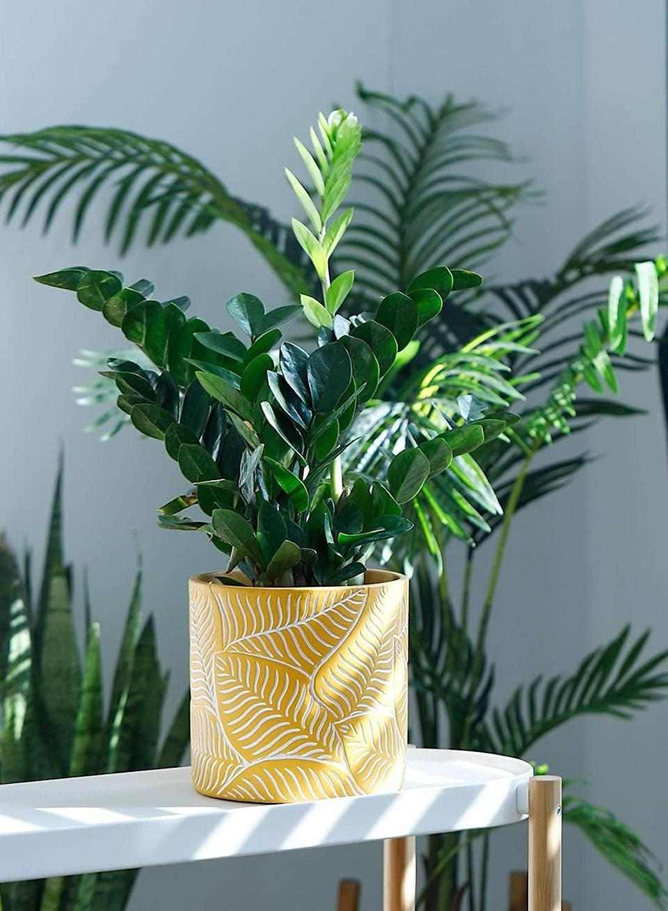 <p>Add this <span>Potey Vintage Yellow Cement Planter with Leaf Embossment</span> ($41) for a pop of color! The medium-sized planter will look great on a coffee table or on a bookshelf. </p>