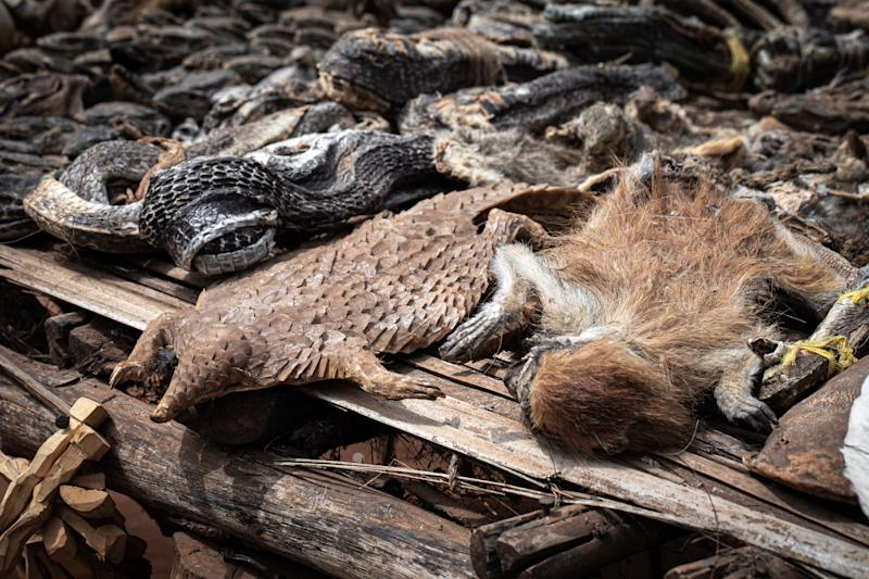 A dead pangolin and monkey lie side by side amid a pile of other dead animals.