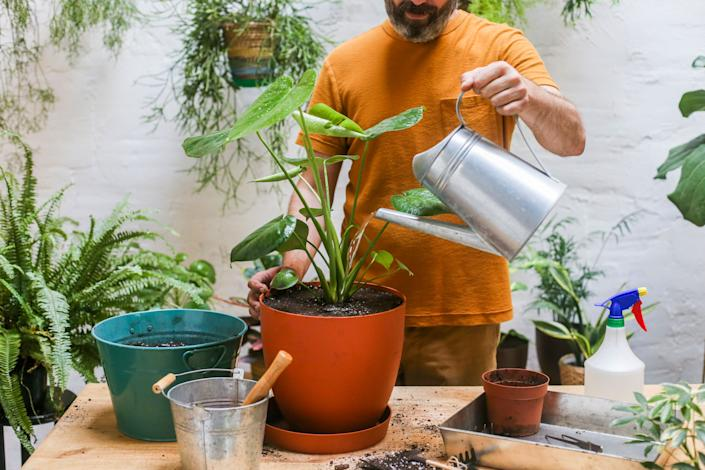 Typically, the problem isn't how much water you use to water a plant, but it's watering something too frequently. (Photo: Cavan Images via Getty Images)
